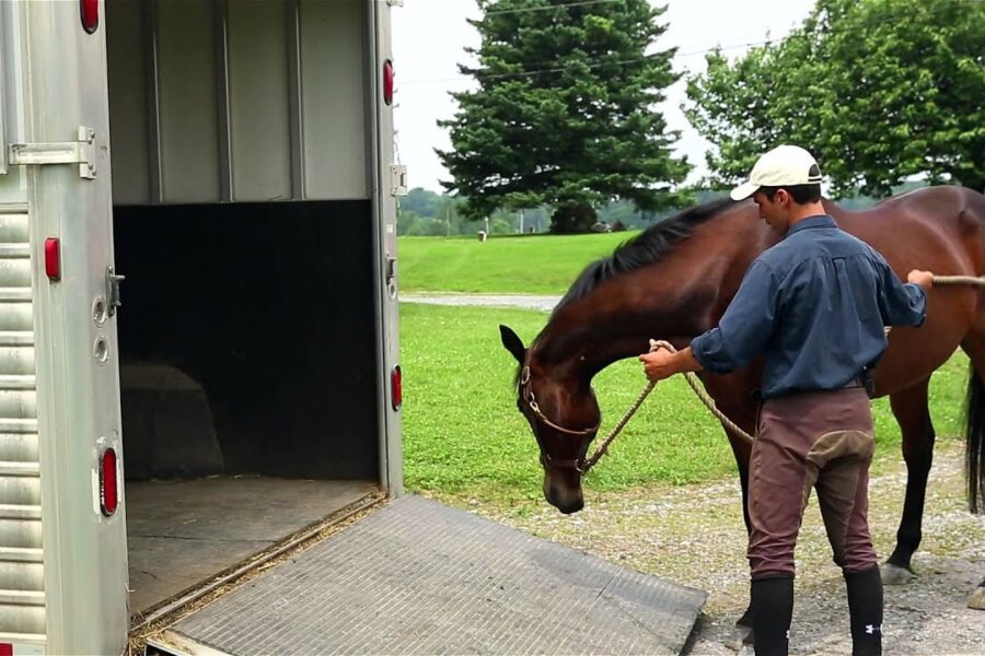 How to Trailer a Horse Safely
